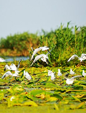 7 Days to discover the Danube Delta in Romania