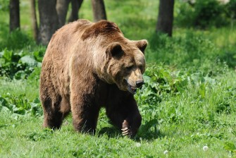 4 days exploring the wild fauna of the Carpathian Mountains