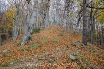 Two days in Cozia - the perfect autumn hike